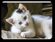 Cat_header_more_suqare_all